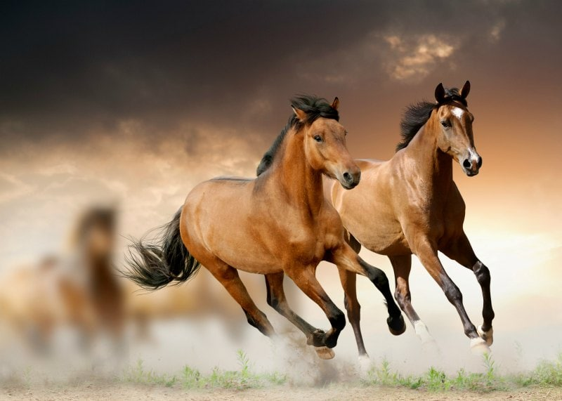 horses for mini episode